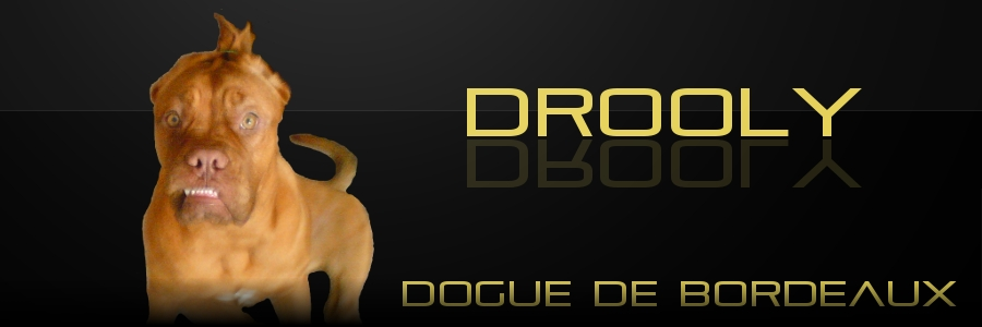 Dogue de Bordeaux Drooly